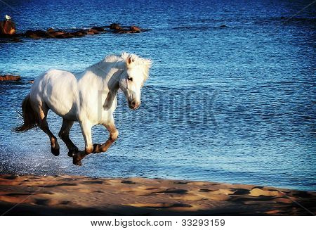 White Horse Running On Beach