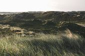 Summer Landscape At North Sea, On Sylt Island, Hills With Green Moss And High Grass, In Germany. Nor poster