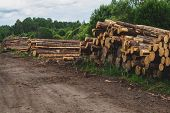 Wooden Logs In The Forest. Chopped Tree Logs Stack. Nature Landscape. Pile Of Timber poster