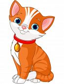 Illustration of Cute cat wearing a red collar with  gold tag.