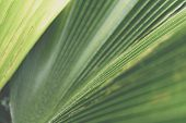 Greenery Background Of Nature Plant And Leaf poster
