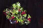 Red Ripe Lingonberry In A Glass On A Dark Wooden Background. Traditional Vegetation Of North America poster