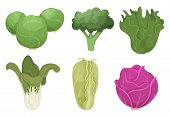 Cabbage Cartoon. Green Clean Vegetable Eco Food Fresh Garden Broccoli Tasty Farm Cooking Vector. Ill poster