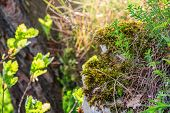 Fluffy Soft Green Moss On Stones In The Forest. Soft Moss Carpet. Detailed Image Of Moss. Background poster