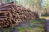 Natural Wooden Logs Cut And Stacked In Pile, Felled By The Logging Timber Industry. Pile Of Felled P poster