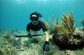 pic of spearfishing  - Man spearfishing underwater with speargun with staghorn coral in background - JPG