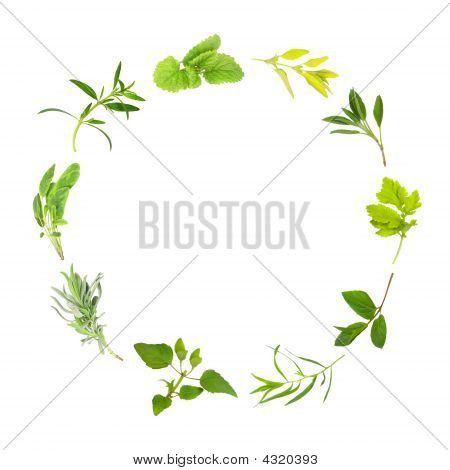 Herb Leaf Circle