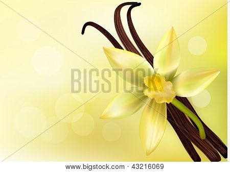 Vanilleschoten und Blume. Vektor-Illustration.