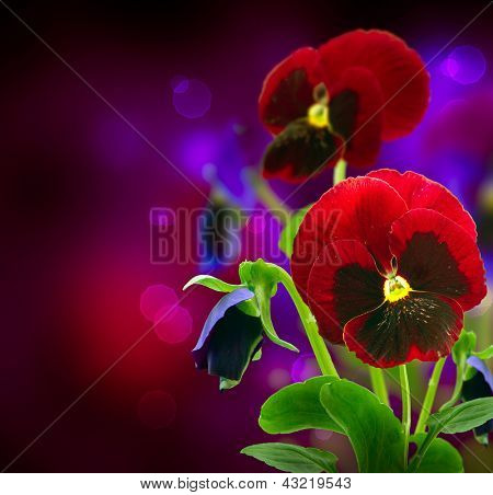 Spring Flowers Pansy over Black. Pansy Flower Art Design