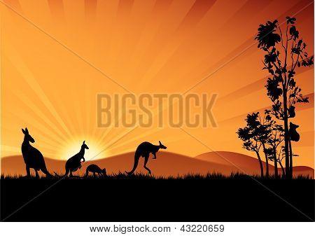 Australia Kangaroos And Koloa