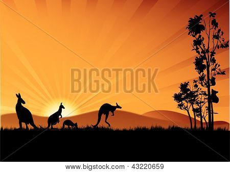 Koloa y canguros de Australia