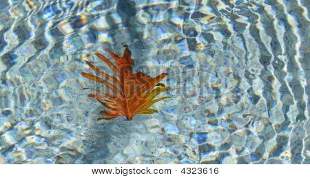 Leaf In The Pool