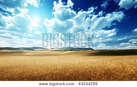 barley  hills Tuscany, Italy