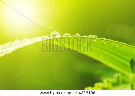 Green Leaf With Dews In Morning