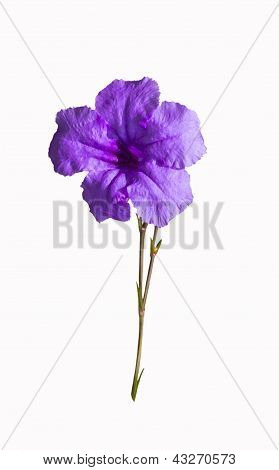 Violet Flower With Stem