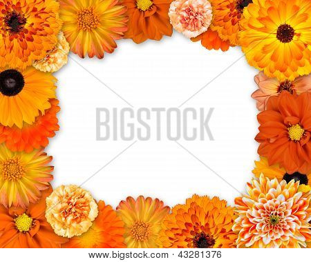 Flower Frame With Orange Flowers On White