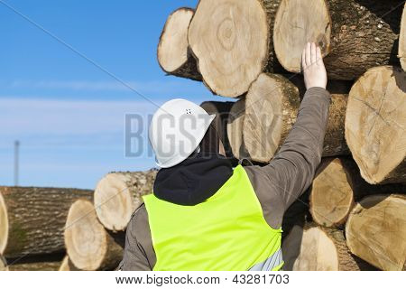 Forester near logs off the pile