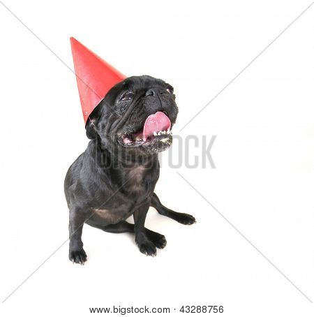 a cute black pug sitting down with a birthday hat on