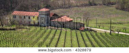Italy. Liguria. Italian Vineyard With Villa