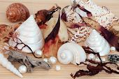 stock photo of mother-of-pearl  - Seashell and seaweed selection with driftwood - JPG