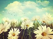 stock photo of farm land  - Vintage look of summer daisies in grass - JPG