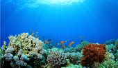 picture of biodiversity  - Coral Reef Underwater in Ocean - JPG
