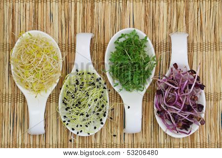 Alfalfa, leek sprouts and watercress on porcelain spoons on bamboo mat