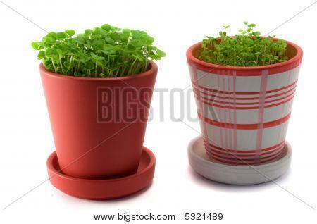 Garden Pots Plant