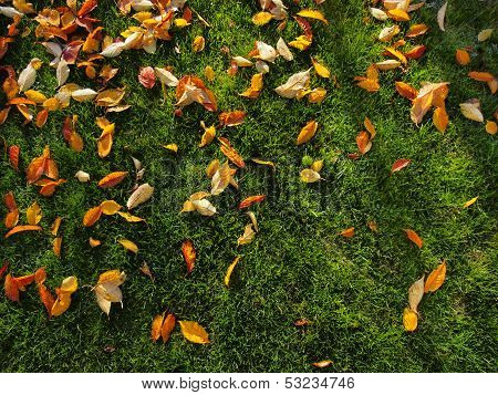 Autumn Leave On Green Grass