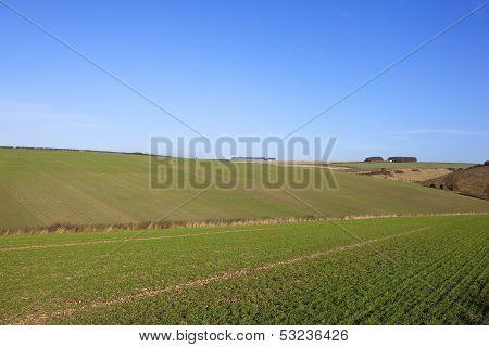Seedling Crops