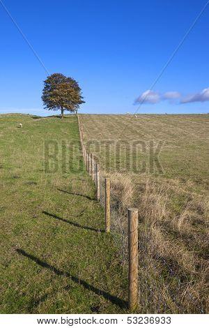 Livestock Pastures