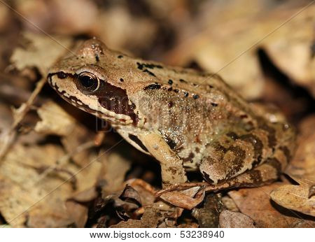 Frog Camouflage