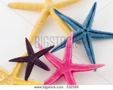 Estrella de mar en diversos colores