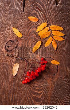 Rowanberry And Yellow Leaves