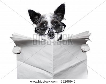 Dog Newspaper