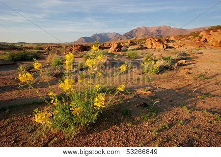 Desert landscape at sunrise, Brandberg mountain, Namibia