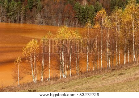 Trees Polluted Lake