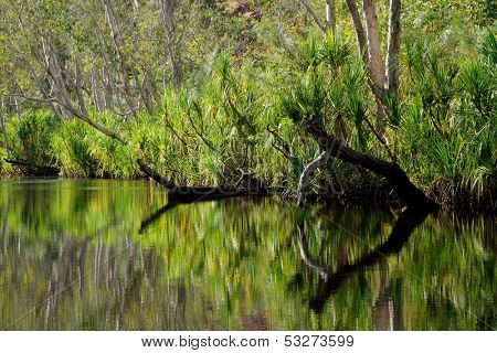 Trees with reflections, Leliyn (Edith falls), Nitmiluk National Park, Northern Territory, Australia