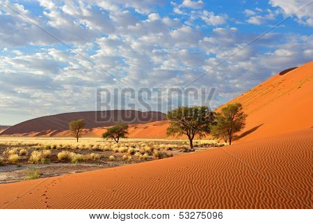 Sossusvlei landscape with Acacia trees and red sand dunes, Namibia, southern Africa