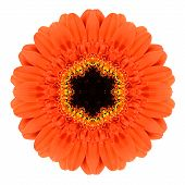 stock photo of kaleidoscope  - Orange Mandala Gerbera Flower Kaleidoscope Isolated on White Background - JPG