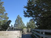Wooden Walkway with conifer tree and blue sky background at Illinois Starved Rock State Park