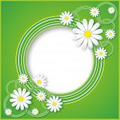 Abstract Green Background With Flower Chamomile
