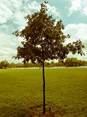 stock photo of kensington  - Vintage look The Kensington Gardens and Hide Park London UK - JPG