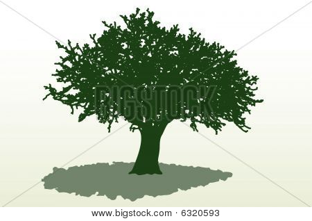 Gran árbol sombra