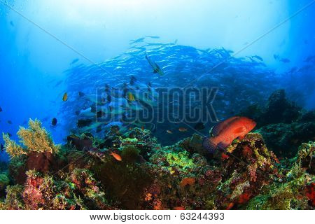 Coral Reef and School of Bigeye Jacks (Trevallies) on Sipadan Reef, Malaysia