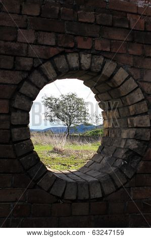 Window and Tree