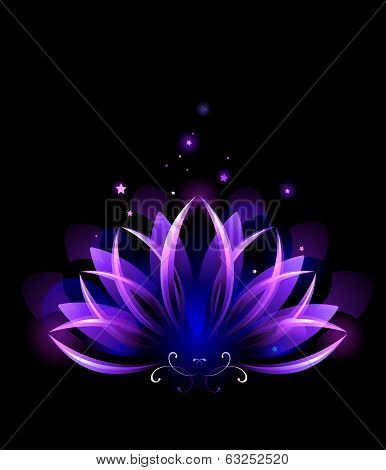 Purple Lotus