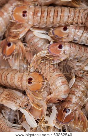beady-eyed shrimp