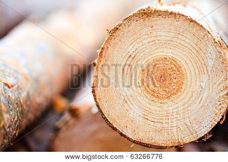 Annual Rings On Sawn Pine Tree Timber Wood