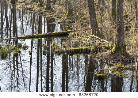 Early spring in the Biebrza National Park, Poland, Podlasie
